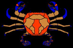 sr crab.brown